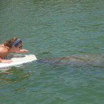 Manatee encounter